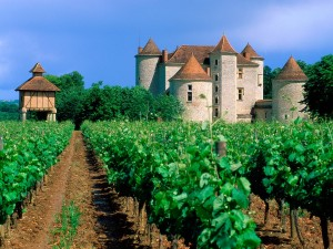 classic_french_vineyards