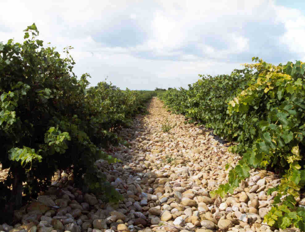 chateauneuf du pape tours with terroirs travels